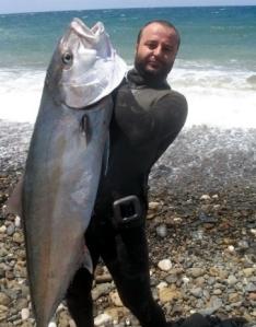 Zıpkınla avlanan servet kök 42 kiloluk akya cinsi balık